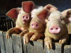 Les-trois-petits-cochons_s